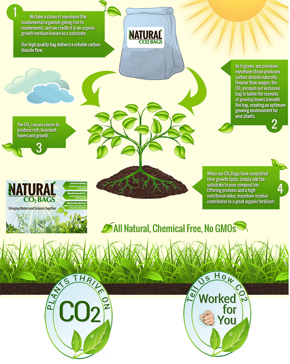 Infographic Design Greensburg